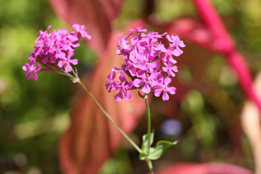 Photographs of Purple Flowers