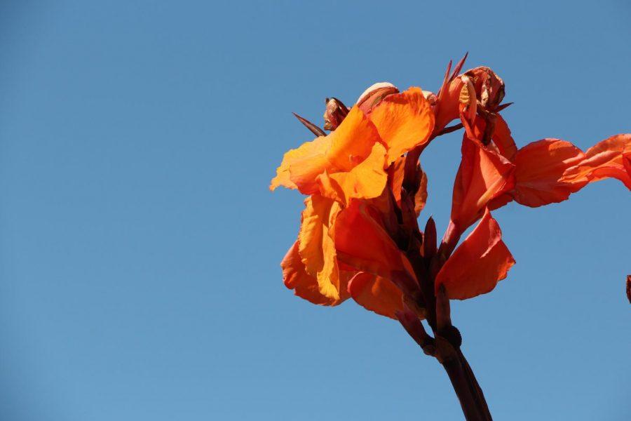 Single Orange Flower Photo
